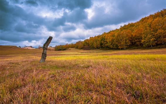 Wallpaper Grass, trees, golden autumn