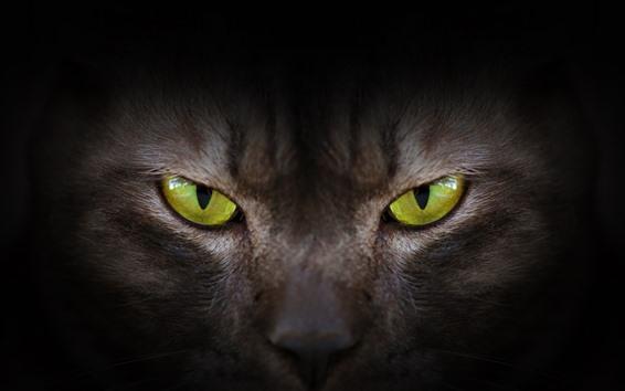 Papéis de Parede Olhos verdes, gato, vista dianteira, rosto
