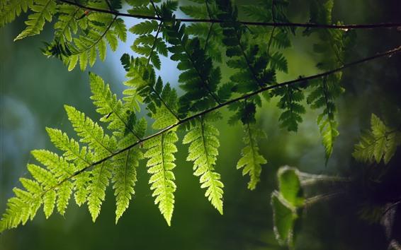 Wallpaper Green fern leaves, twigs