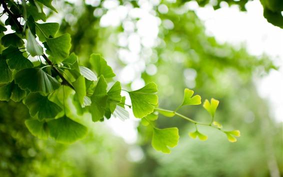 Wallpaper Green leaves, twigs, hazy