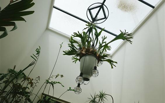 Wallpaper Houseplant, window, light