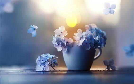 Wallpaper Hydrangea, petals, cup, hazy