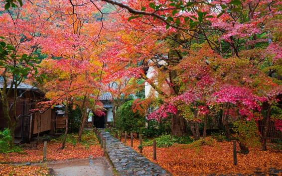 壁紙 日本、木、赤い紅葉、秋、家、庭