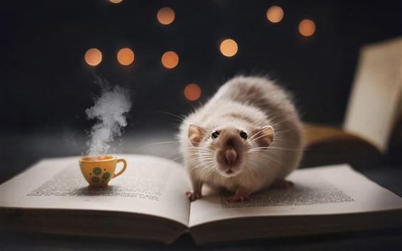 Papéis de Parede Mouse olhar para você, livro, café