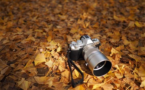 Fond d'écran Olympus appareil photo, feuilles jaunes