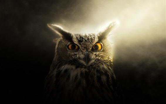 Papéis de Parede Coruja, olhos, orelhas, luz de fundo