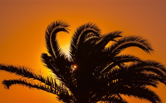 Wallpaper Palm tree, leaves, silhouette, sunset