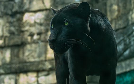 Wallpaper Panther, green eyes, wildlife