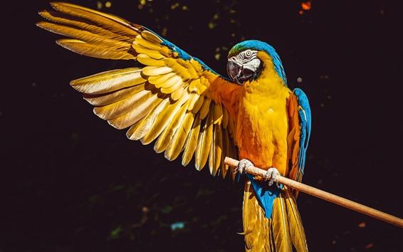 Papéis de Parede Papagaio abre uma asa, arara