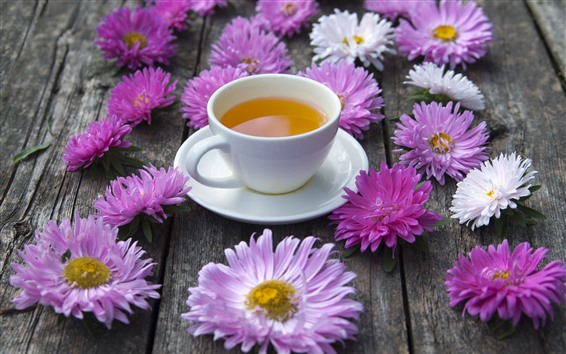 Wallpaper Pink and white asters flowers, one cup of tea