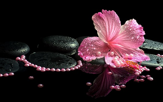 Wallpaper Pink hibiscus, petals, water droplets, stones, SPA