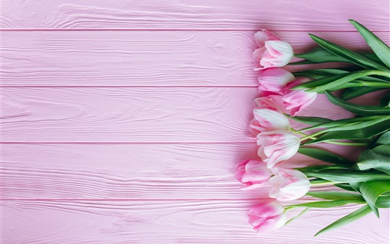 Wallpaper Pink tulips and pink background