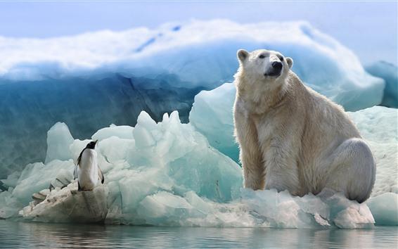 배경 화면 북극곰과 펭귄, 빙산