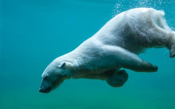 Обои Полярный медведь, плавающий под водой