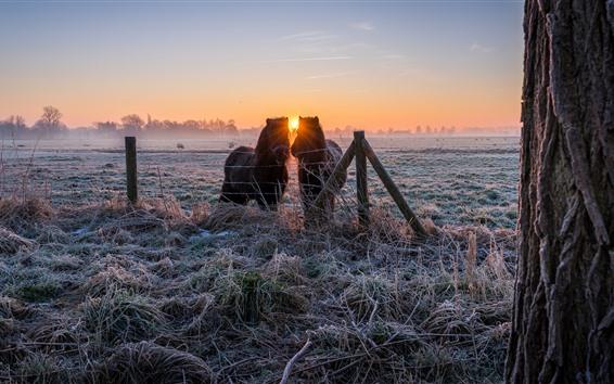 Обои Пони, трава, мороз, забор, зима, восход солнца