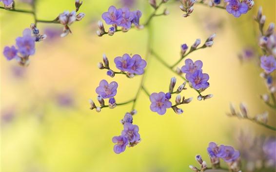 Wallpaper Purple flowers, twigs, spring, hazy