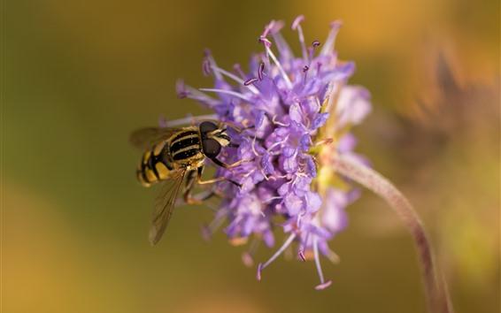 Papéis de Parede Flores roxas, gotas de água, abelha