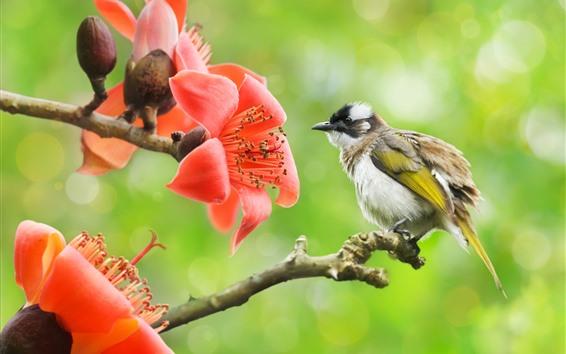 Fond d'écran Coton rouge, fleurs, oiseau