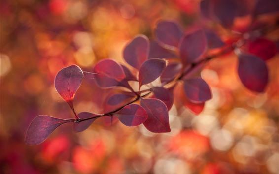 Обои Красные листья, ветки, туманные, осень