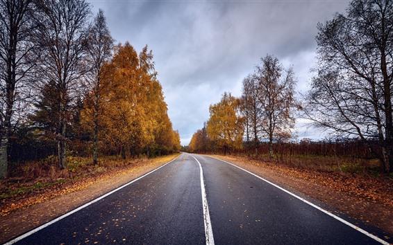 Papéis de Parede Estrada, árvores, outono, anoitecer