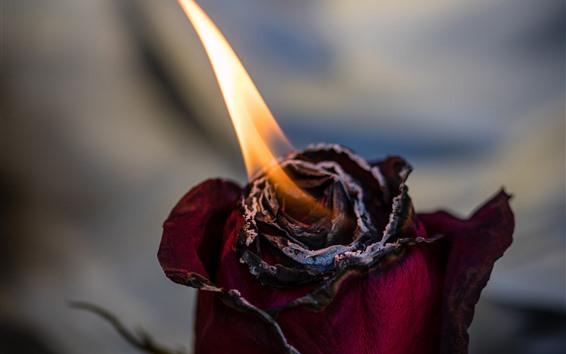 Papéis de Parede Rosa queimando