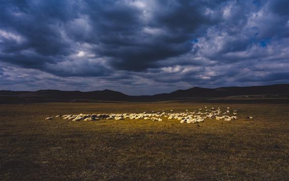 Papéis de Parede Ovelhas, pastagens, nuvens, crepúsculo