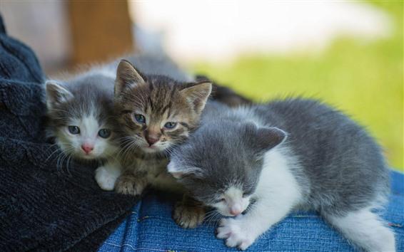 Обои Три симпатичных котята, домашнее животное