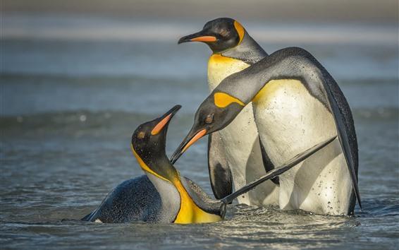 Papéis de Parede Três, pingüins, ficar, em, água