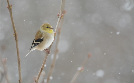 Papéis de Parede Tit, inverno, nevado