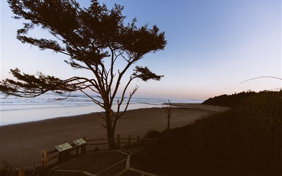 Wallpaper Tree, beach, sea, dusk