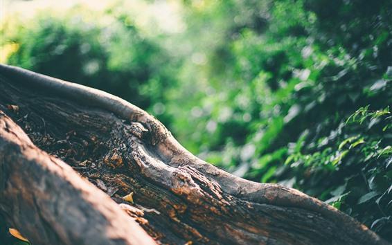Wallpaper Tree trunk, green background