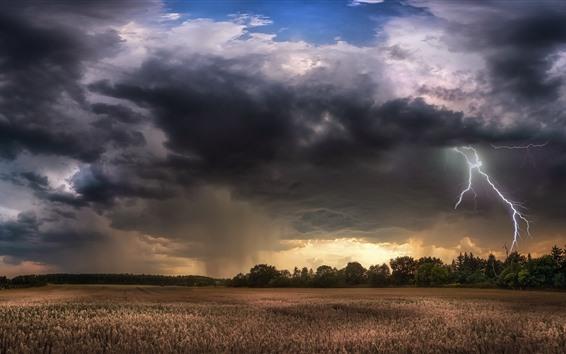 배경 화면 나무들, 들판들, 구름들, 번개, 폭풍우