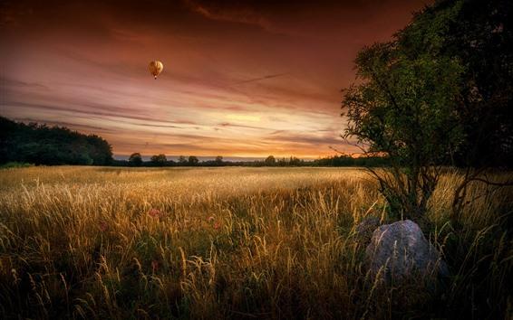 Wallpaper Trees, fields, hot air balloon, sky, dusk