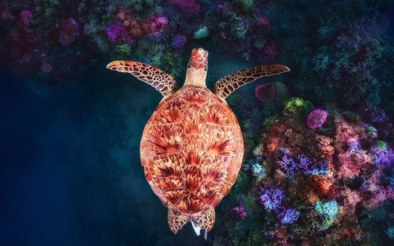 Papéis de Parede Tartaruga, subaquática, recife de coral