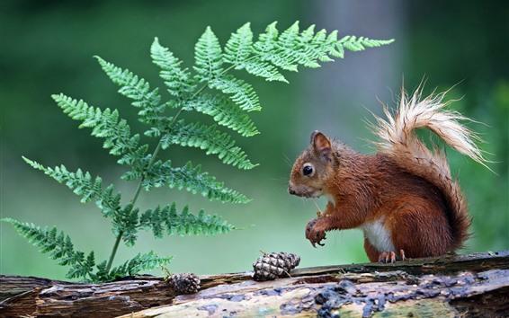 Wallpaper Wet squirrel, fern leaves