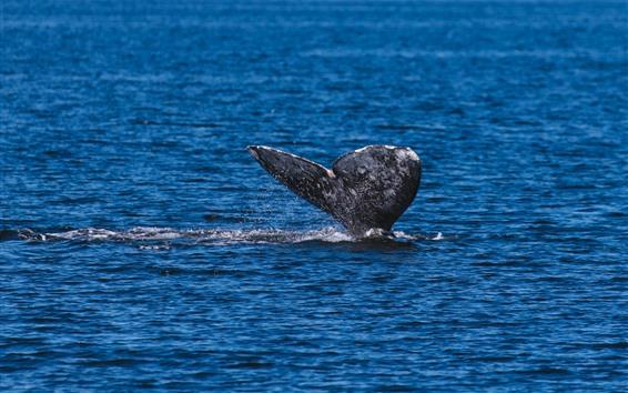 Обои Китовый хвост из воды, морской