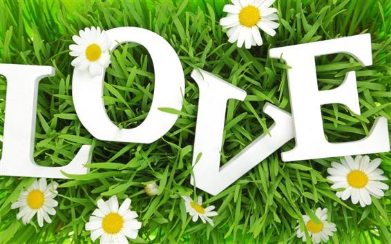 Wallpaper White chamomile, love, grass