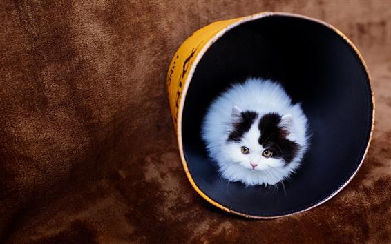 Обои Белый котенок, вид спереди, желтые глаза, ведро