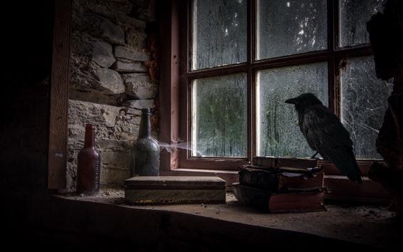 Fond d'écran Fenêtre, livres, bouteilles, corneille, pluie, saleté