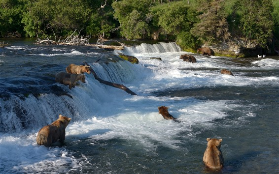 Wallpaper Alaska, Katmai National Park, bears, waterfall