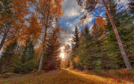 배경 화면 가을, 목, 경로, 하늘, 구름