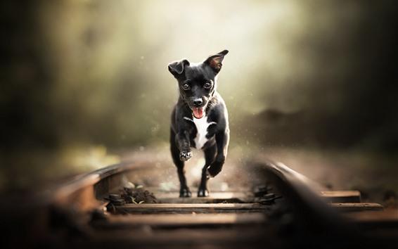 Papéis de Parede Cão preto correndo, ferrovia