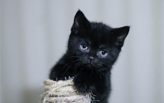 Обои Черный котенок, пушистый