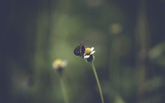 Wallpaper Black moth, flower, hazy background