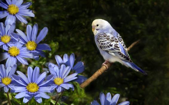 Wallpaper Blue flowers, parrot