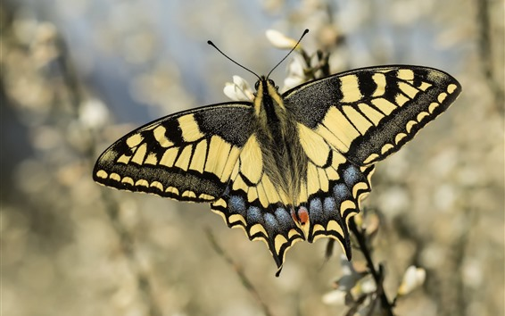 Обои Бабочка, крылья, цветы, боке
