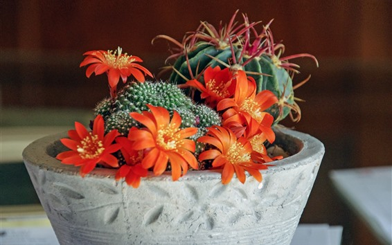 Wallpaper Cactus, orange flowers