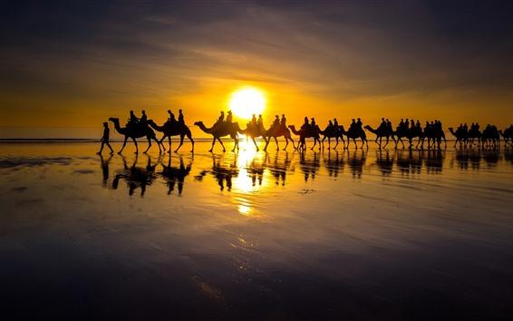 Обои Верблюд, люди, силуэт, озеро, закат