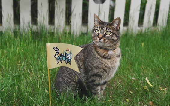 Papéis de Parede Gato e bandeira, grama, cerca
