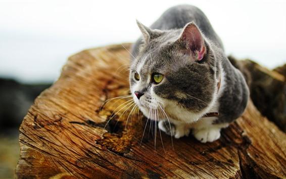 Papéis de Parede Olhar de gato, toco
